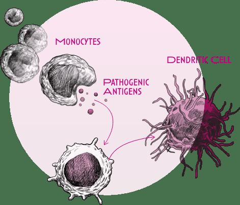 Allergies Diagram