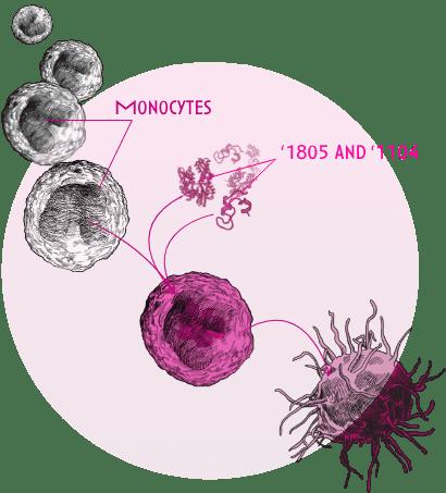 Revolo Molecule 1804 and 1104 Diagram